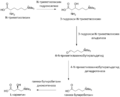 CarnitineBiosynthesis rus.png