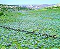 Castle Gardens Scenic Area by Ten Sleep, Wyoming 25.jpg