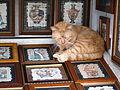 Cat (356532414).jpg