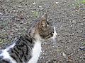 Cat (4938330260).jpg