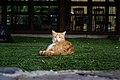 Cat in the grass of Hotel Rural Maipez 05.jpg