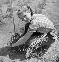 Cecil Beaton Photographs- Women's Horticultural College, Waterperry House, Oxfordshire, 1943 DB250.jpg