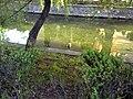 Central Park - panoramio (3).jpg