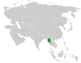 Cerasophila thompsoni distribution map.png
