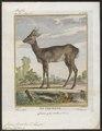 Cervus capreolus - 1700-1880 - Print - Iconographia Zoologica - Special Collections University of Amsterdam - UBA01 IZ21500009.tif