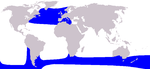 Long-finned pilot whale range