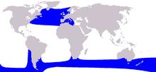 Cetacoj-intervalmapa Long-naĝilizitpiloto Whale.PNG