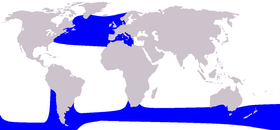 Cetacea range map Long-finned Pilot Whale.PNG