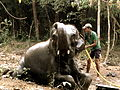 Chandaka Forest and Elephant Reserve 04.JPG
