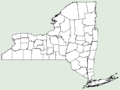 Chelone lyonii NY-dist-map.png