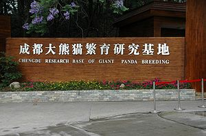 Chengdu Research Base of Giant Panda Breeding - Image: Chengdu panda breeding