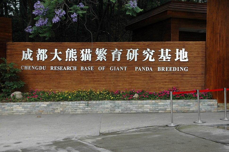 Chengdu panda breeding