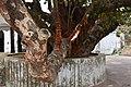 Choti Dargah Malda (24).jpg