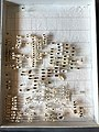 Chrysomelidae collection, Natural History Museum, London 106.jpg