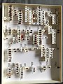 Chrysomelidae collection, Natural History Museum, London 250.jpg