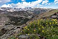 Cinquefoil on an alpine ridge overlooking Mirror Lake and the Beartooth Mountains (48290711046).jpg