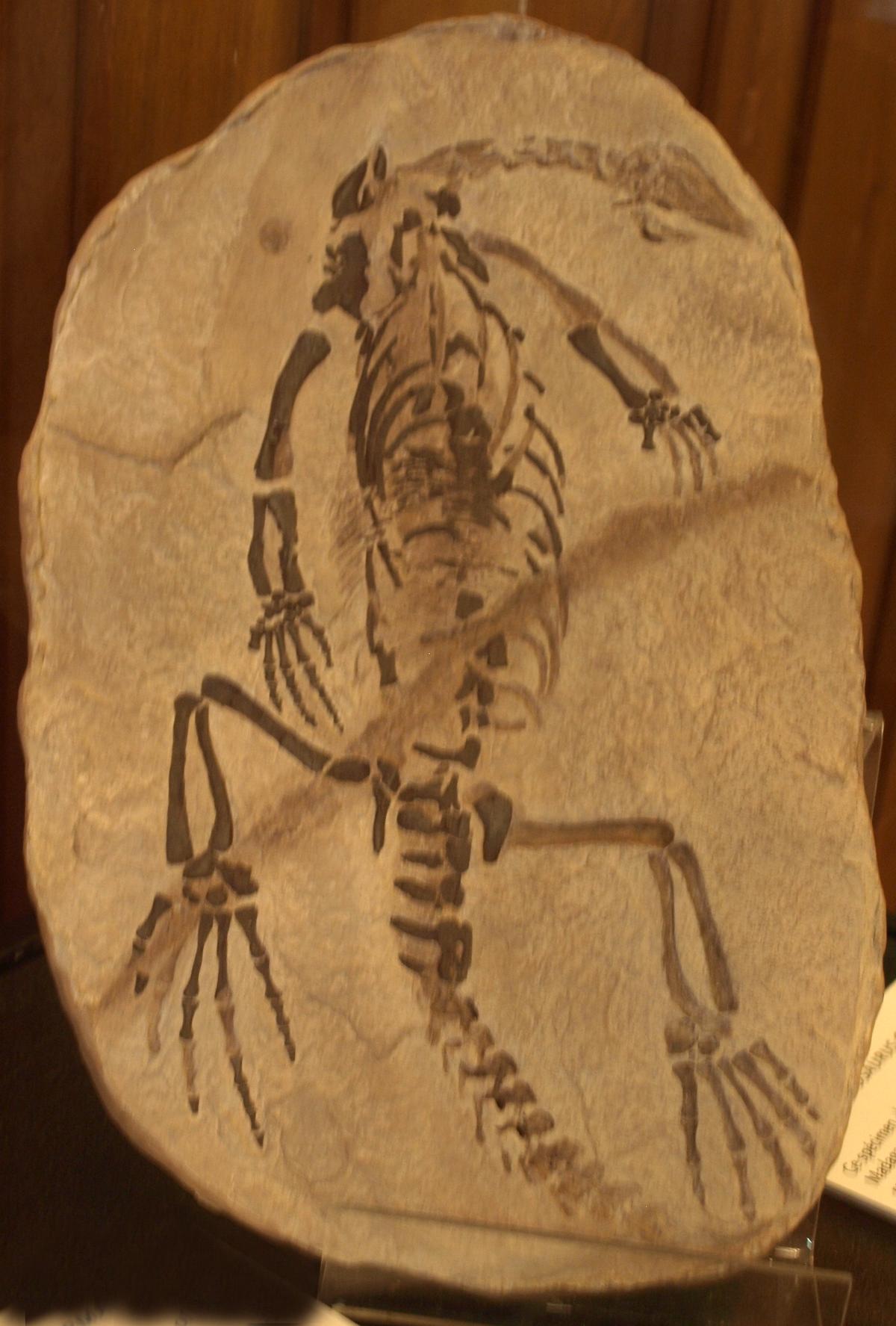 Eosuchia Wikipedia