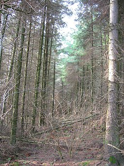 Clearing in conifer plantation - geograph.org.uk - 342596