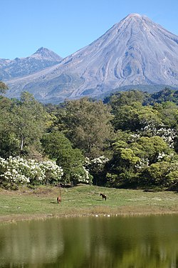 meaning of colima