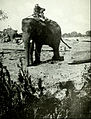 Collier's 1921 Burma - using elephants for moving lumber.jpg