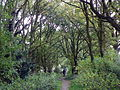 Colney Heath LNR (20092860419).jpg