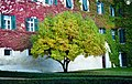 Colour Tree (20088413).jpeg