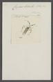 Copius - Print - Iconographia Zoologica - Special Collections University of Amsterdam - UBAINV0274 040 05 0021.tif