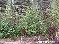 Copper Creek, Yukon-Charley Rivers, 2003 2 (f0947456-bac0-4702-b194-8d9c14592168).jpg