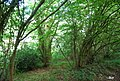 Coppiced trees on the edge of Fernfell Golf Course - geograph.org.uk - 2097814.jpg