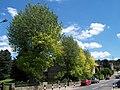 Coronation Park Trees, Oughtibridge - 3 - geograph.org.uk - 1114030.jpg