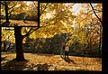 Couple Walking Amongst Fall Leaves (Missouri State Archives) (8204303396).jpg