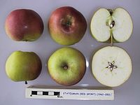 Cross section of Statesman (red sport), National Fruit Collection (acc. 1960-050).jpg
