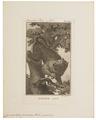 Cynocephalus porcarius - 1791-1804 - Print - Iconographia Zoologica - Special Collections University of Amsterdam - UBA01 IZ20100053.tif