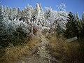 Czerwony szlak z Przełęczy Żłobki na Radziejową - panoramio.jpg