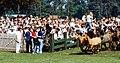 Dülmen, Wildpferdefang 1982 -- 2010 -- 5.jpg