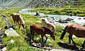 Dal Rifugio Lissone alla Baita Adamé - panoramio.jpg