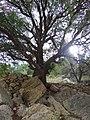 Dana bioreserve - panoramio (10).jpg
