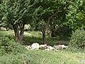 Dana bioreserve - panoramio (5).jpg