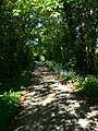 Dappled lane, near Cyffylliog - geograph.org.uk - 802150.jpg