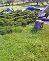 Dartmouth, NS, Canada - panoramio (5).jpg