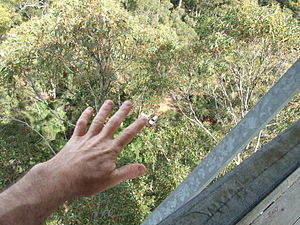 Dave Evans Bicentennial Tree - Comparative perspective of a hand and a car from the lookout
