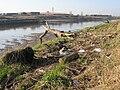 Debris on the bank of the River Dee-Afon Dyfrdwy - geograph.org.uk - 687085.jpg
