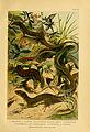 Deutschlands Amphibien und Reptilien (5981668669).jpg