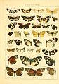 Die Gross-Schmetterlinge der Erde (Taf. 2) BHL9921451.jpg