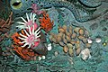 Diorama of a Cincinnatian seafloor (Late Ordovician) - Grewingkia rugose corals, brachiopods, bryozoans (44703203825).jpg