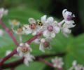 DirkvdM ladybird.jpg