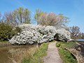 Display of blackthorn by the Medina River 2 - 40565239053.jpg