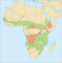 Distribució del facoquer africà comú Possible distribució o observacions accidentals