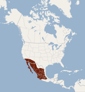 Distribution of Lasiurus xanthinus.png