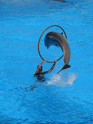Dolphins at Loro Parque, in Tenerife island (S...